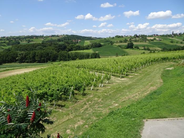 Međimurje wine country
