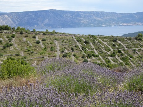 Lavender and stone walls