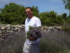 Lavender picker