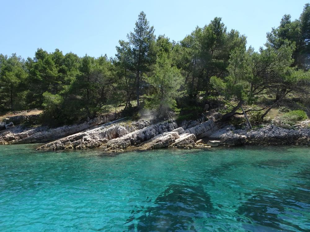 Shady shoreline