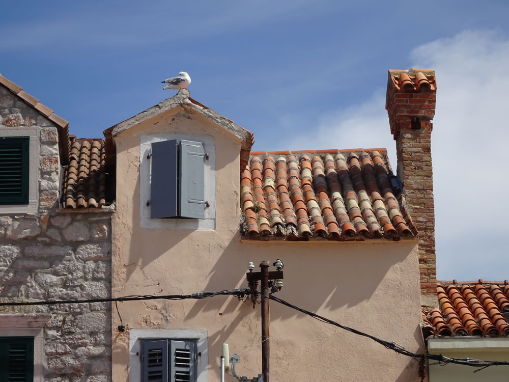Seagull on a roof