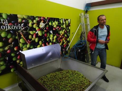 Olives start here