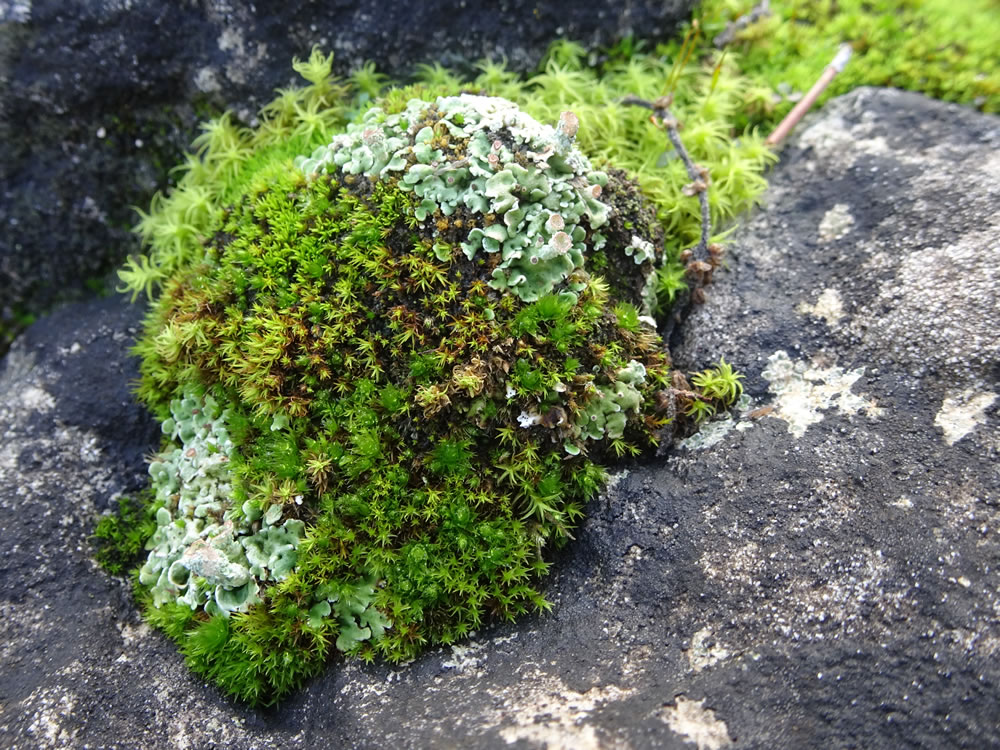 Feathery mosses